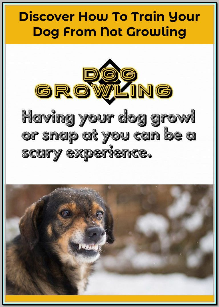 Biting Dog Training That Will Build A Bond Between You And