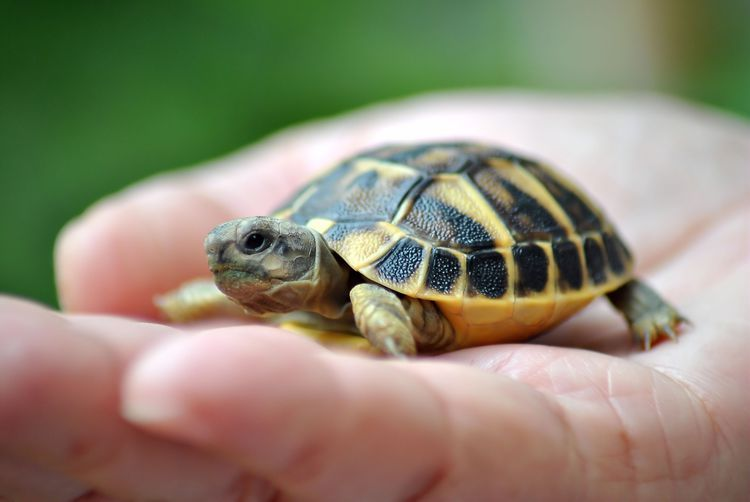100 Perfect Names For Your Pet Turtle Or Tortoise Cute Baby Turtles Pet Turtle Turtle Names