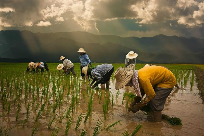 Pin By ศ ภช พ On People Agriculture Photography Nature Photography Photo