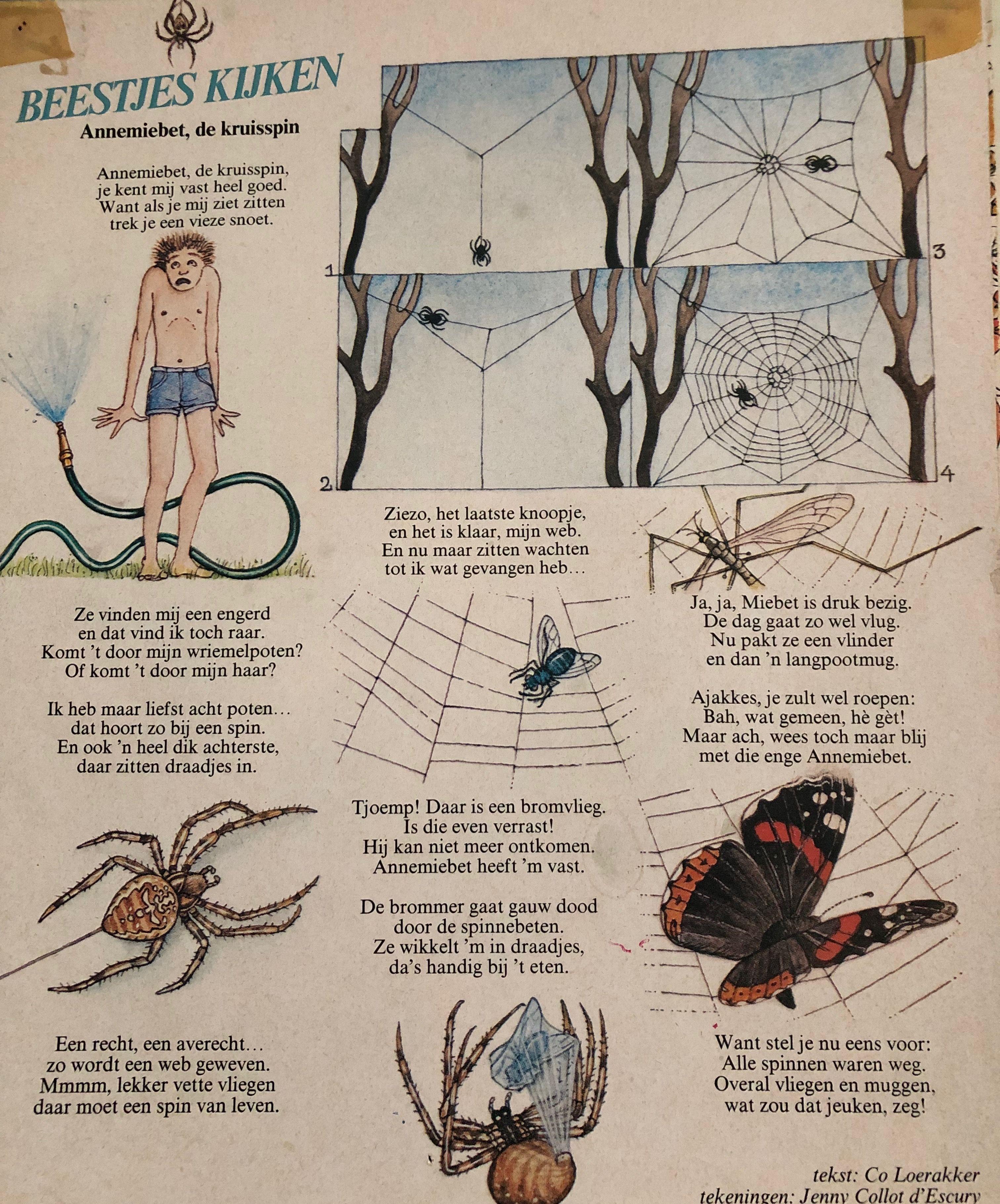 Pin Van Monique Van Leeuwen Op Insecten Kleine Beestjes School School Beestjes Insecten