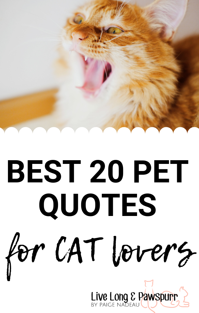 20 Cat Quotes That Will Melt Your Heart Live Long And Pawspurr