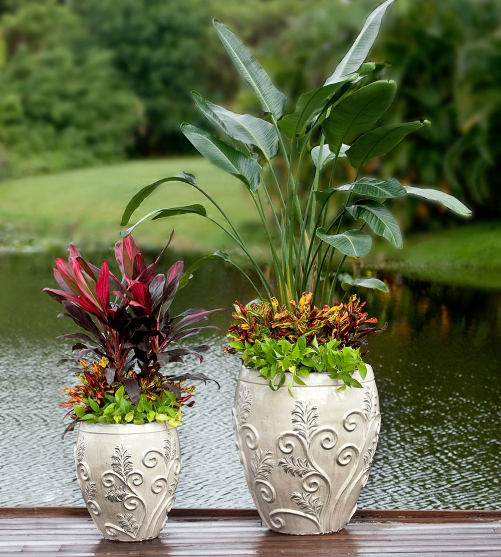 White Bird Of Paradise Sedum Star And Mammey Crotons In Glazed Pottery Designed By Pamela Crawford Wh Container Gardening Backyard Pool Landscaping Plants