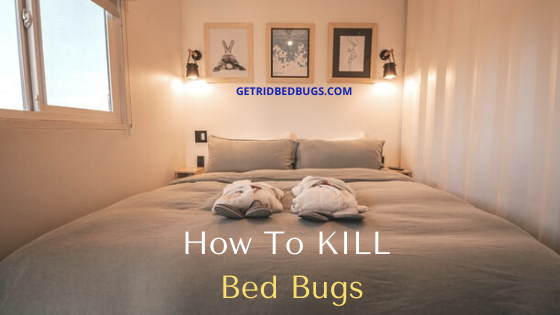 Pin on bed bugs how to get rid of diy