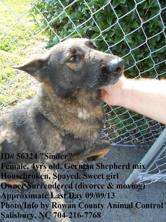 36 Last Day 9 09 56324 Sinder Spayed Dogs Dogs German