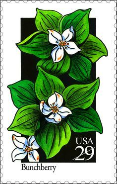 lavanda botanical postage stamps - Google Search