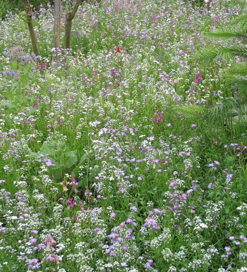Flowers for Shady Places in 2020   Cottage garden ...