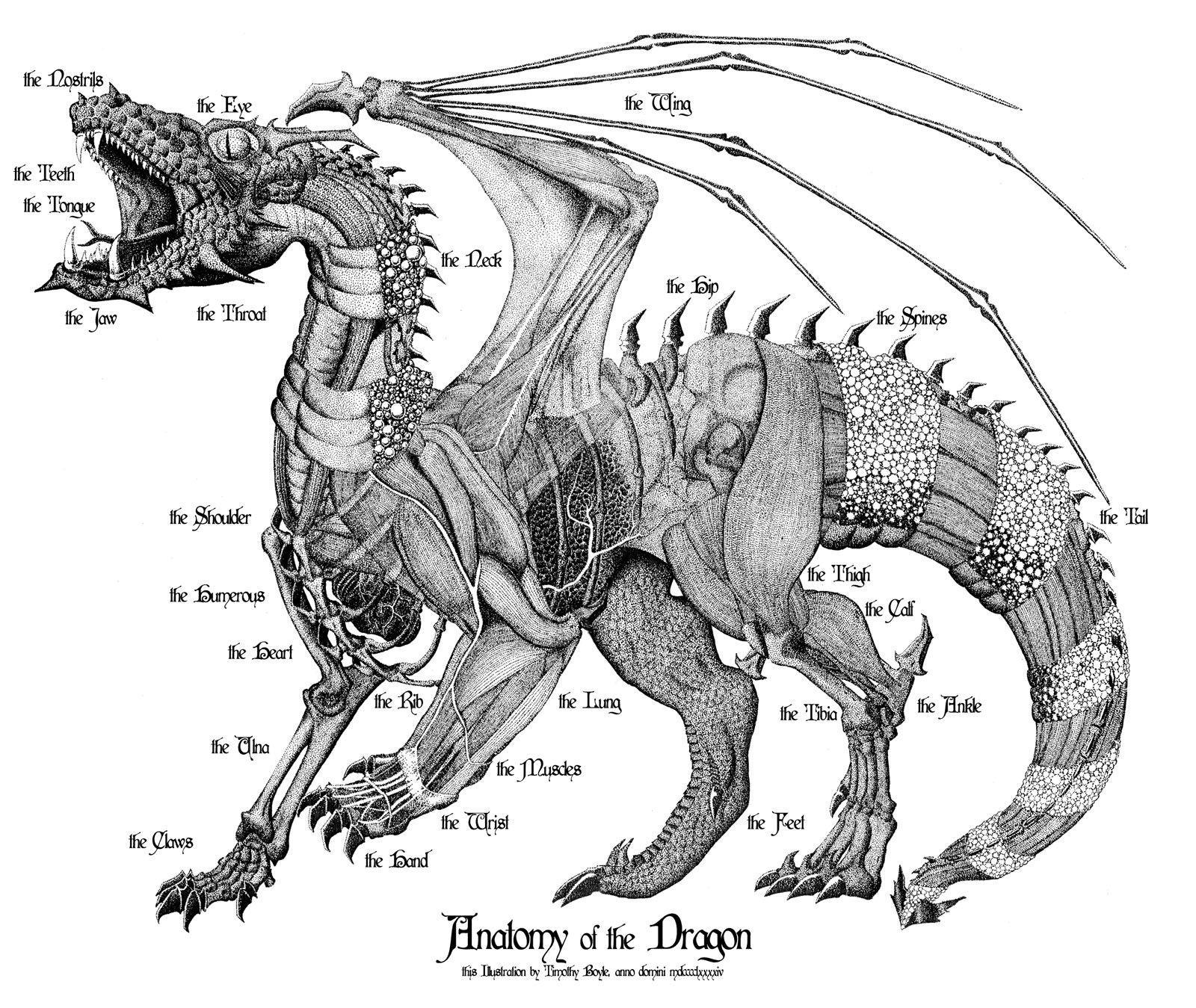 dragon anatomy | Mythology | Pinterest | Anatomy, Dragons and ...
