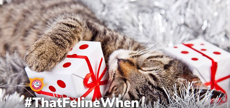 The Maker Of Arm Hammer Cat Litter Launches Feline Generous An Online Platform That Puts Local Cat Shelters Front And Center To Increase Adoption And Dona Cat Shelter Cat Litter