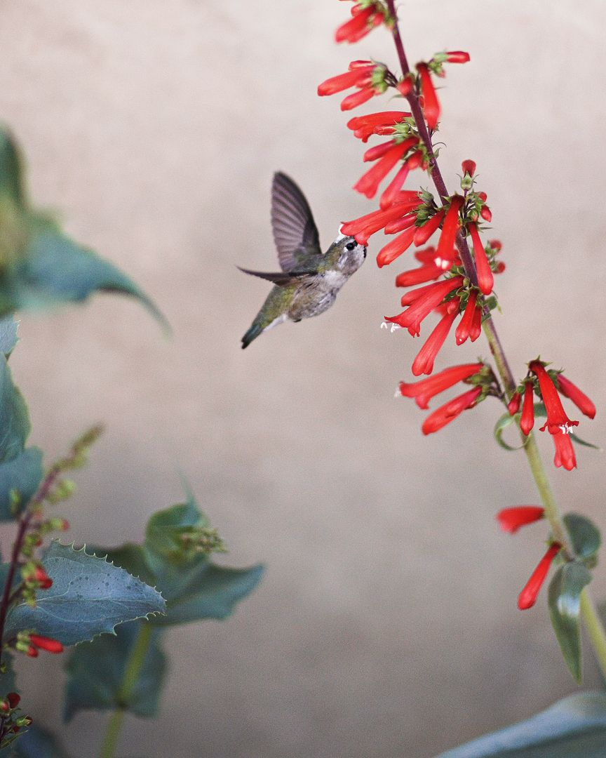 This Is Where Hummingbirds Go Every Winter Migratory