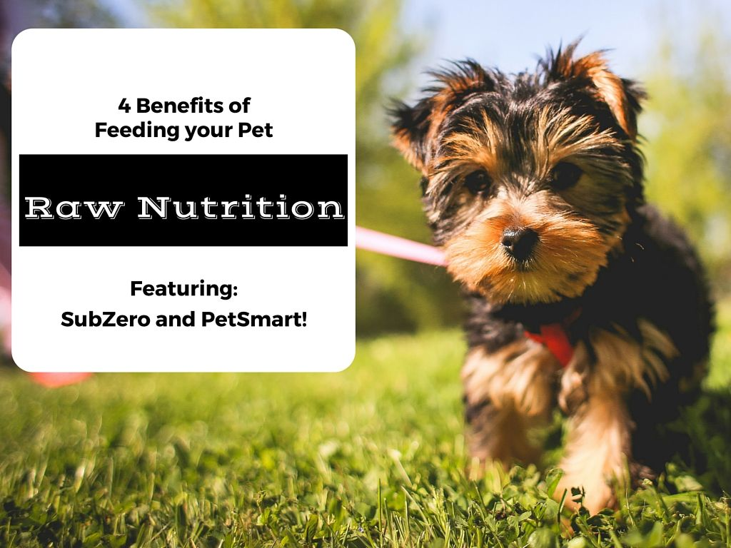 4 Benefits Of Feeding Your Pet Raw Nutrition Subzerodifference Dog Nutrition Cat Nutrition Pets