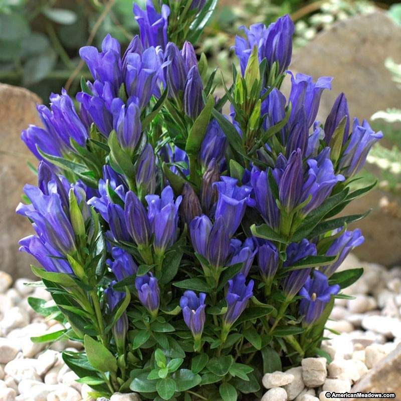 Flower Garden Plans, Purple Garden