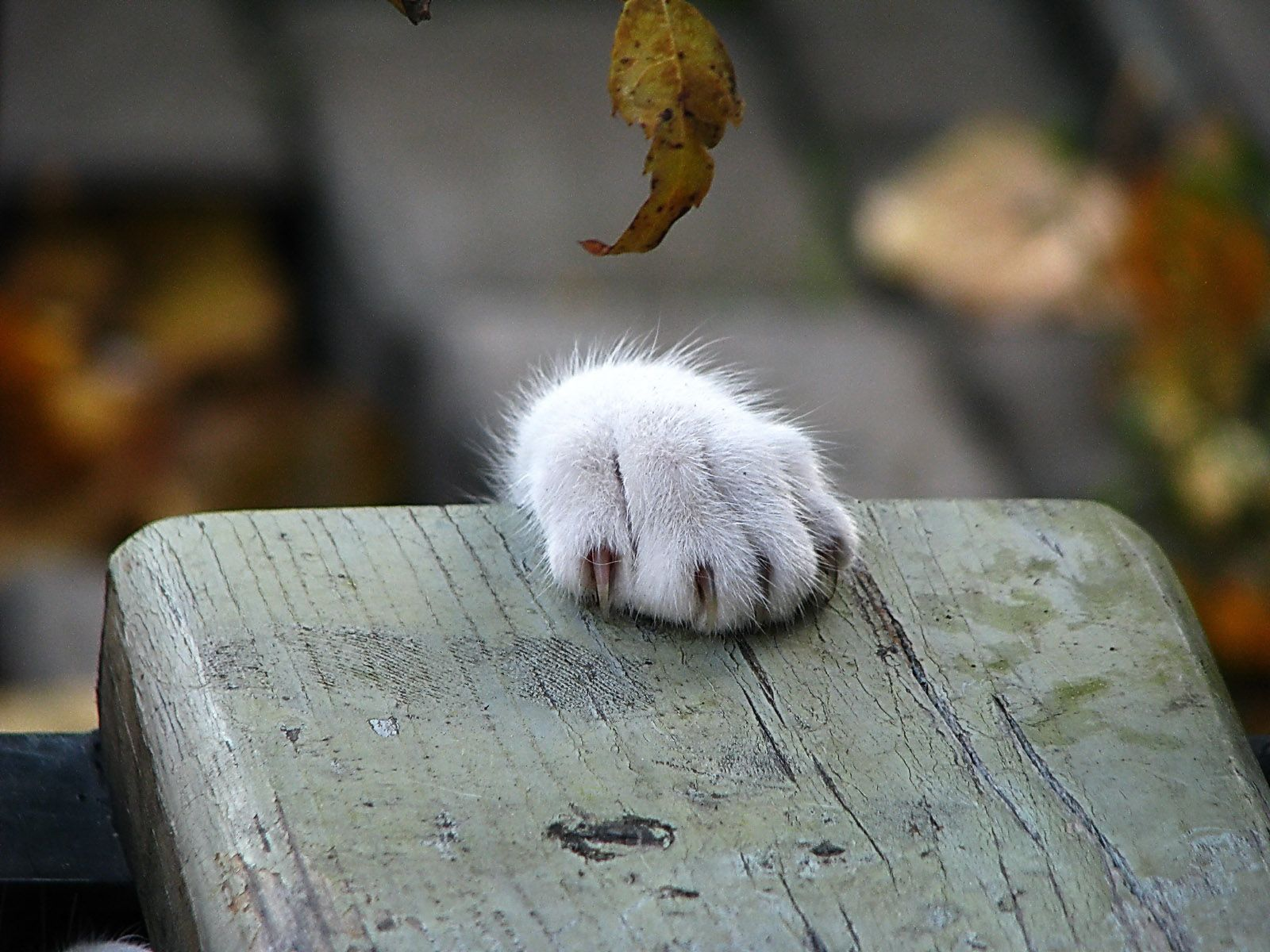 Cat paw wallpaper download Crazy cats, Cats and