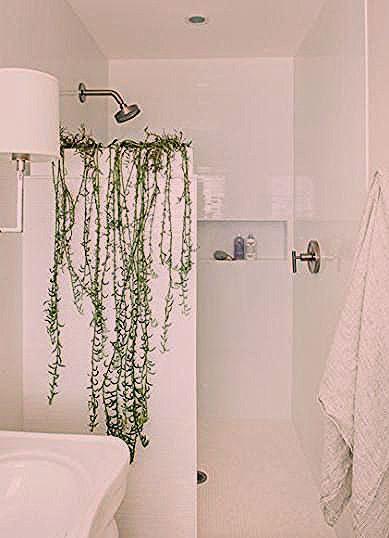 61 best ideas plants bathroom spider 61 best ideas plants bathroom spider