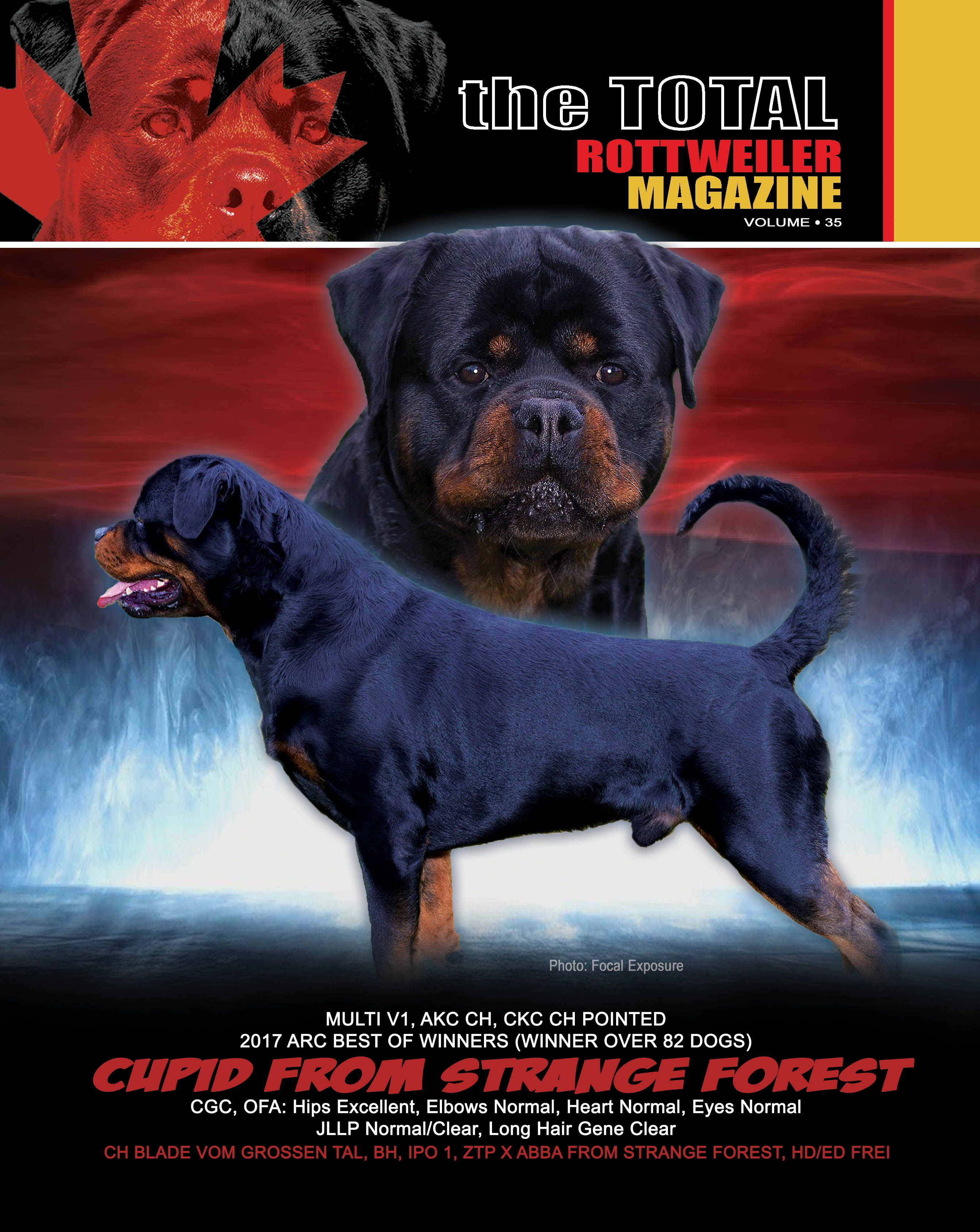 Rottweiler Image By Total Rottweiler Magazine Ltd On Total