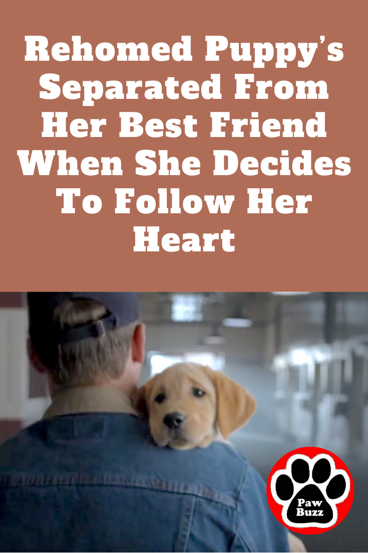 Rehomed Puppy S Separated From Her Best Friend When She Decides To Follow Her Heart In 2020 Best Friends