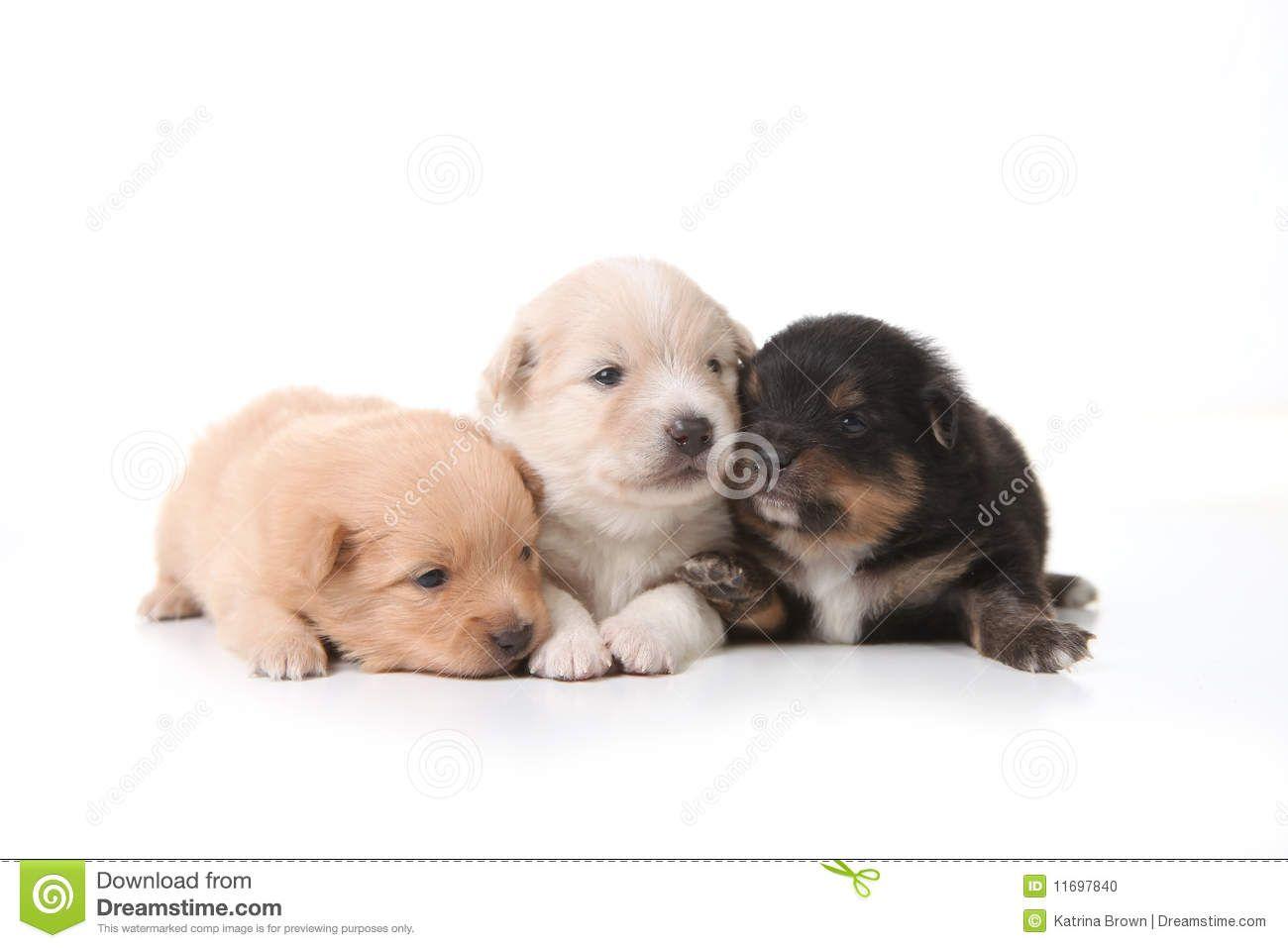 Three Pomeranian Newborn Puppies With Eyes Open Newborn Puppies Puppies Puppy Eyes