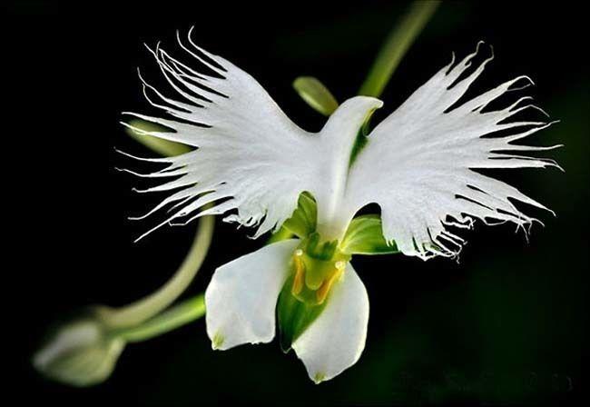 15 beautiful rare flowers that look like something else completely 15 beautiful rare flowers that look like something else completely mightylinksfo