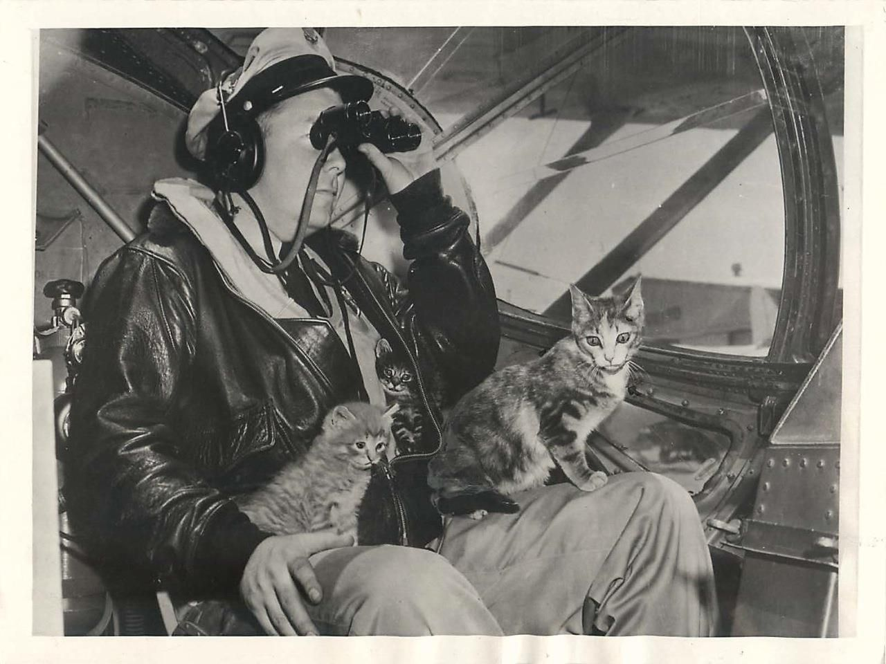 Wwii U S Coast Guard Mascot Cat Salty In Pby During Rescue Mission Press Photo National Cat Day Work With Animals Dog Stories