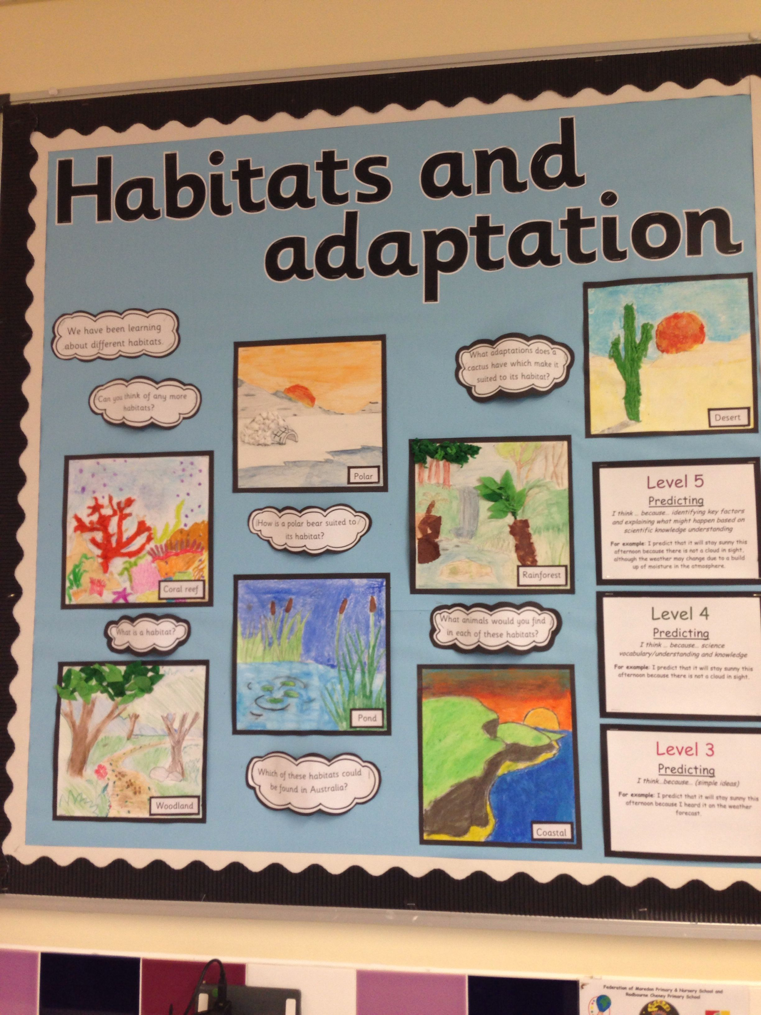 Habitats Display
