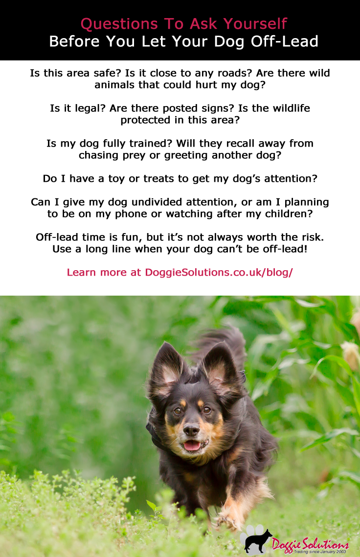 When Is It Ok To Let Your Dog Off Lead At Doggie Solutions Online Pet Store Guard Dog Training Your Dog Agility Training For Dogs