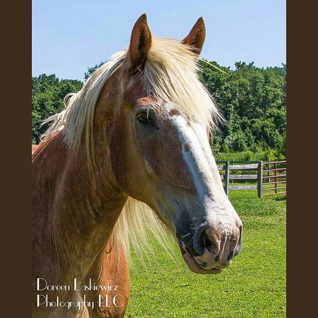 #horse #portrait #pin