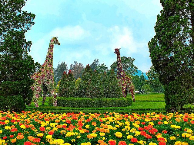 Taman Bunga Nusantara Magical Garden Places To Go Places To Visit
