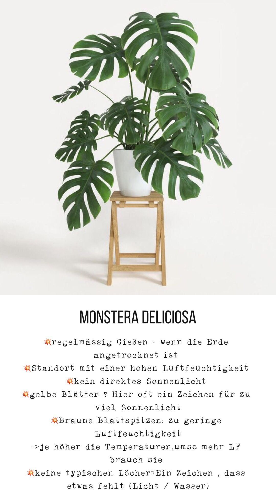 Monstera Deliciosa Modern Design Monstera Deliciosa Garden Boxes Diy Plants