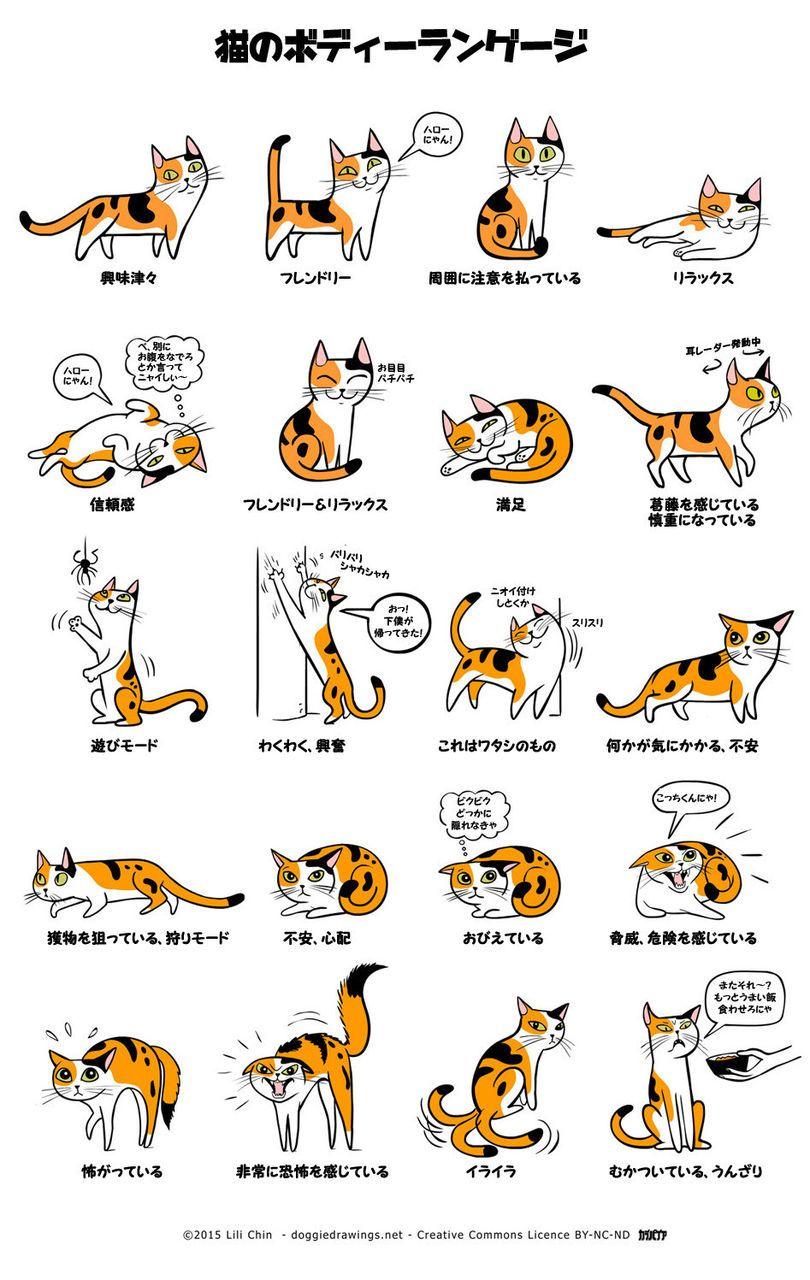 犬と猫の仕草から学ぶ、図解:犬のきもち・猫