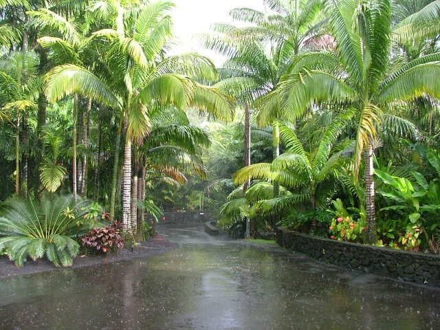 Tropical garden landscape ideas photograph driveway for Garden design with palms