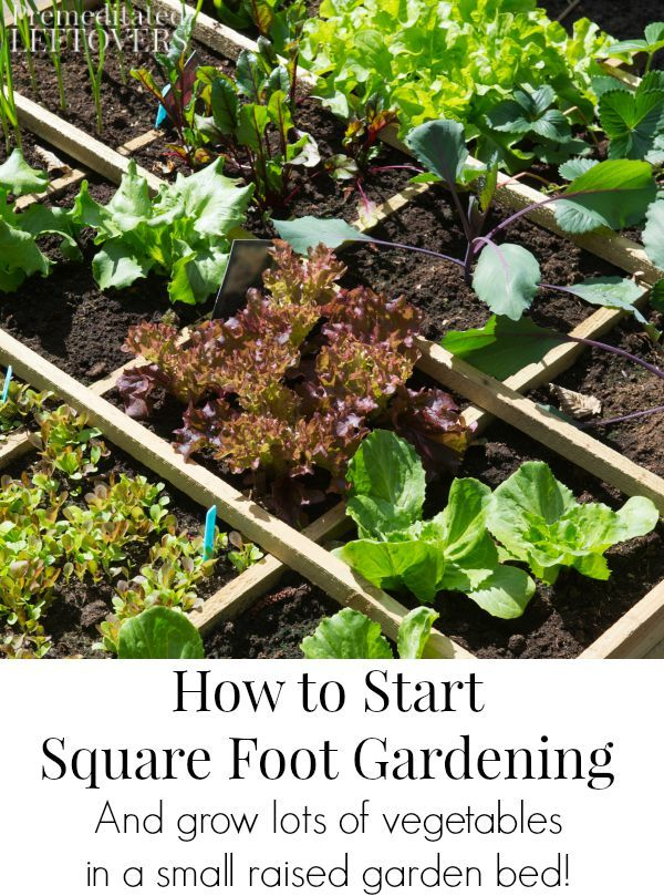 How To Start Using The Square Foot Gardening Method: Square Foot Gardening  Is The Easiest Ways To Grow Lots Of Vegetables In A Small Raised Garden Bed.