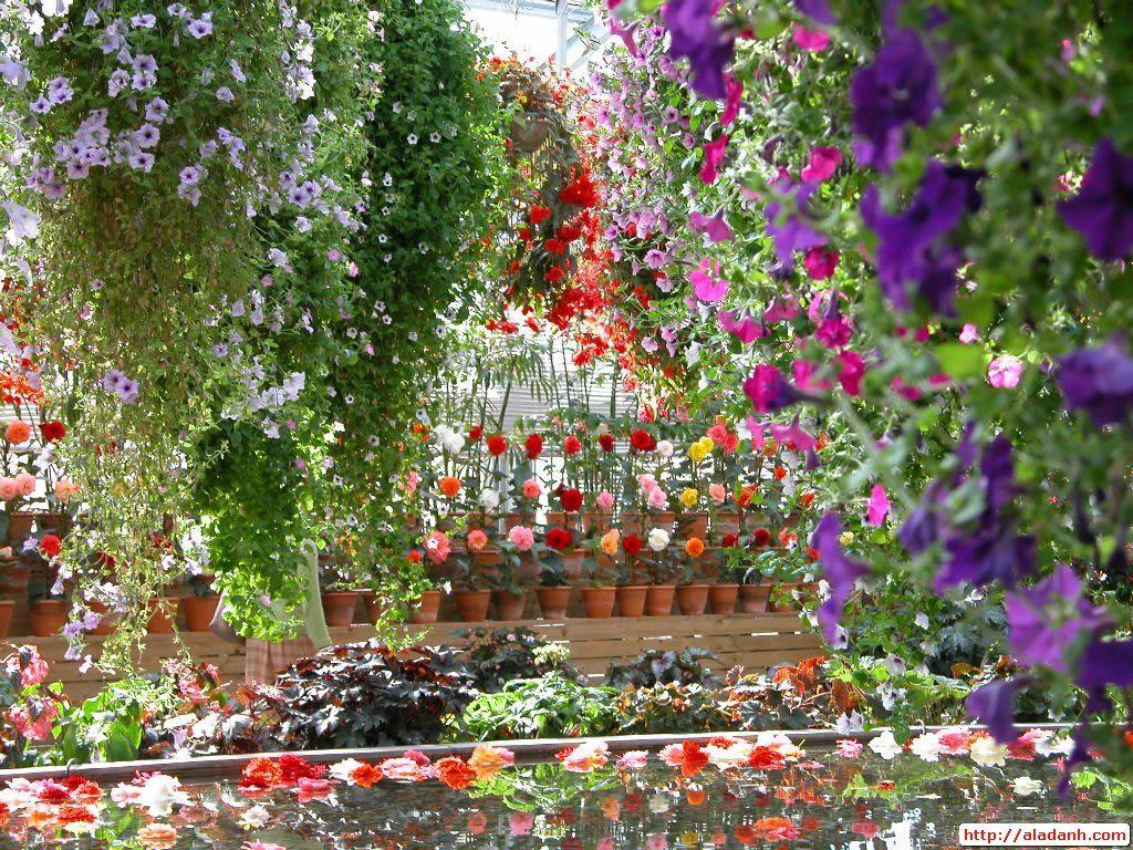 Beautiful Flower Garden Beautiful Flower Garden Wallpaper