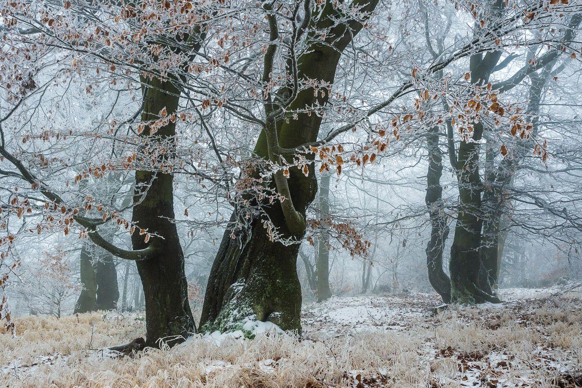 Etwas Frost
