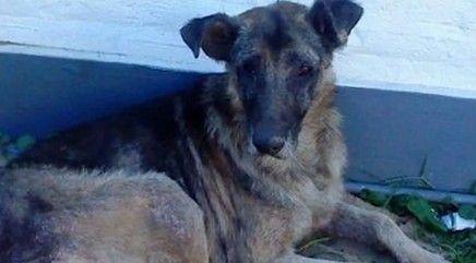 Inspiring rescue dog transformations
