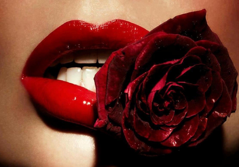 Intense Red Lips Rose Woman Lips Photo Lip Wallpaper Purple Lips