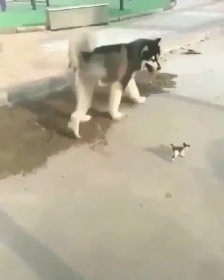 Street kitten with their own personal guardian