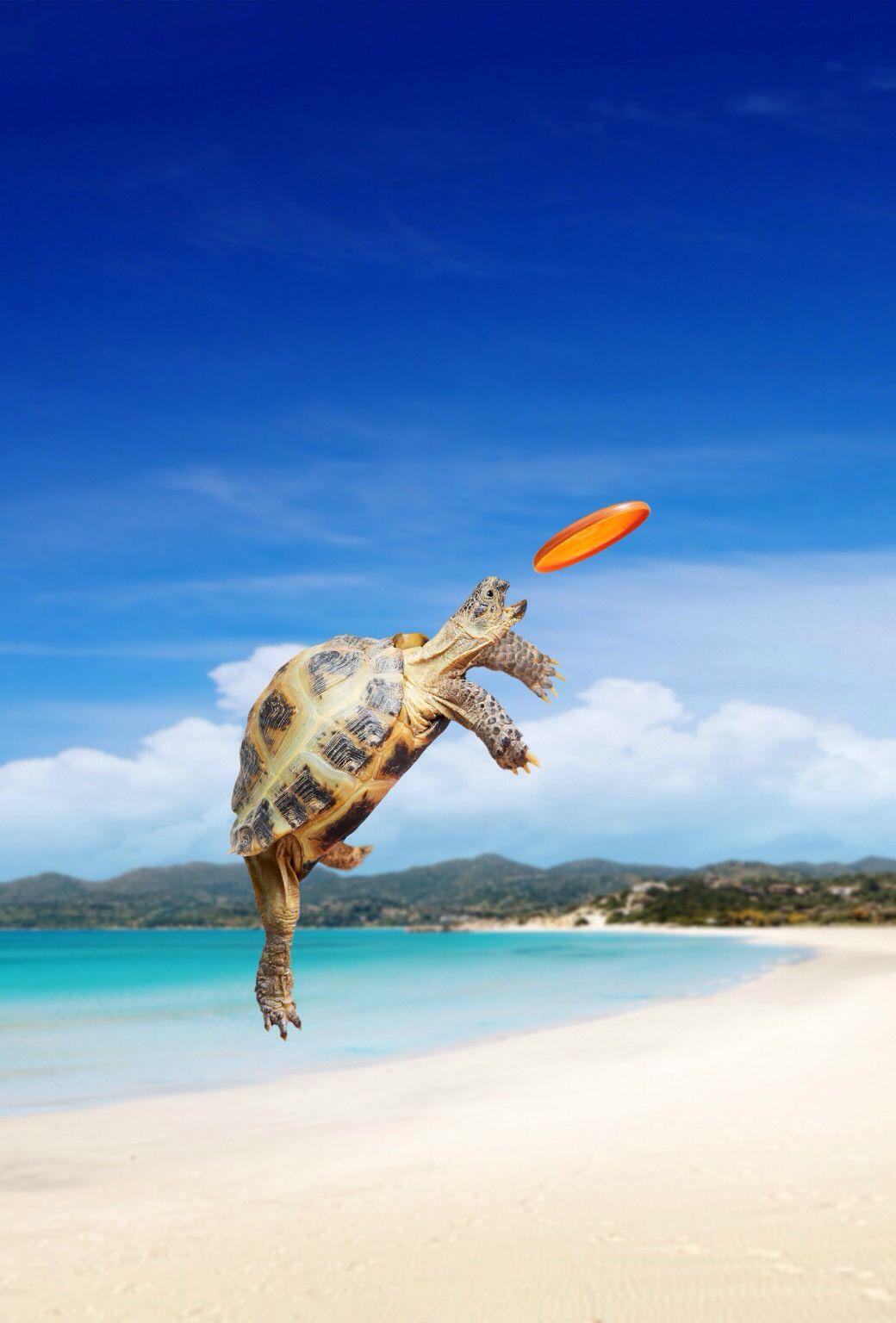 76a8185ddea525188b7d11c993f33d2d turtle catching a frisbee on a beach ios 7 wallpaper accessories