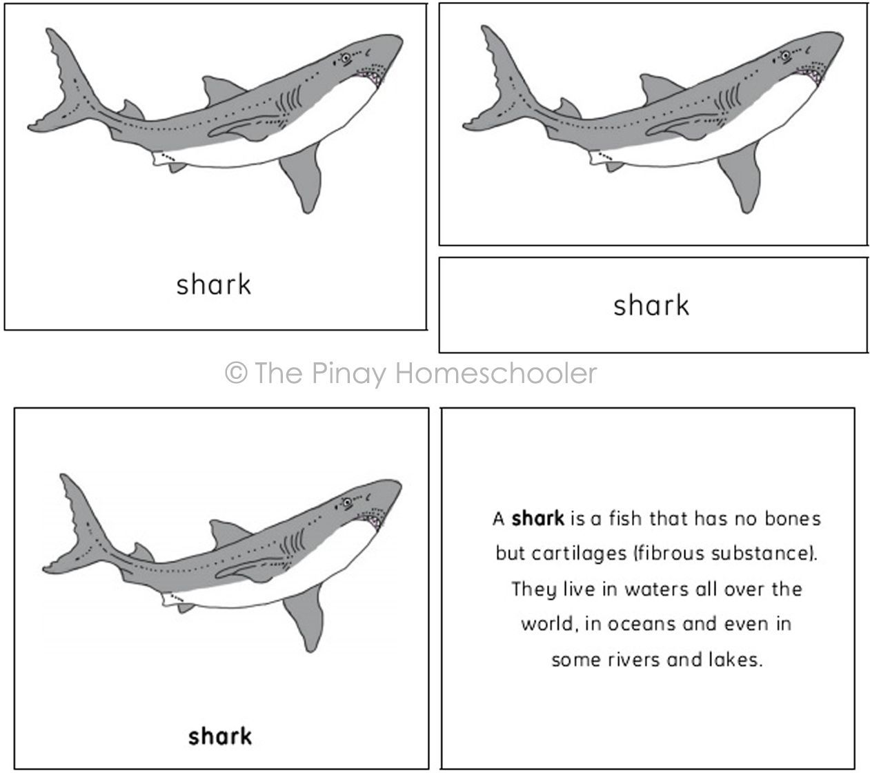 This File Contains 12 Parts Of The Shark And Consist Of