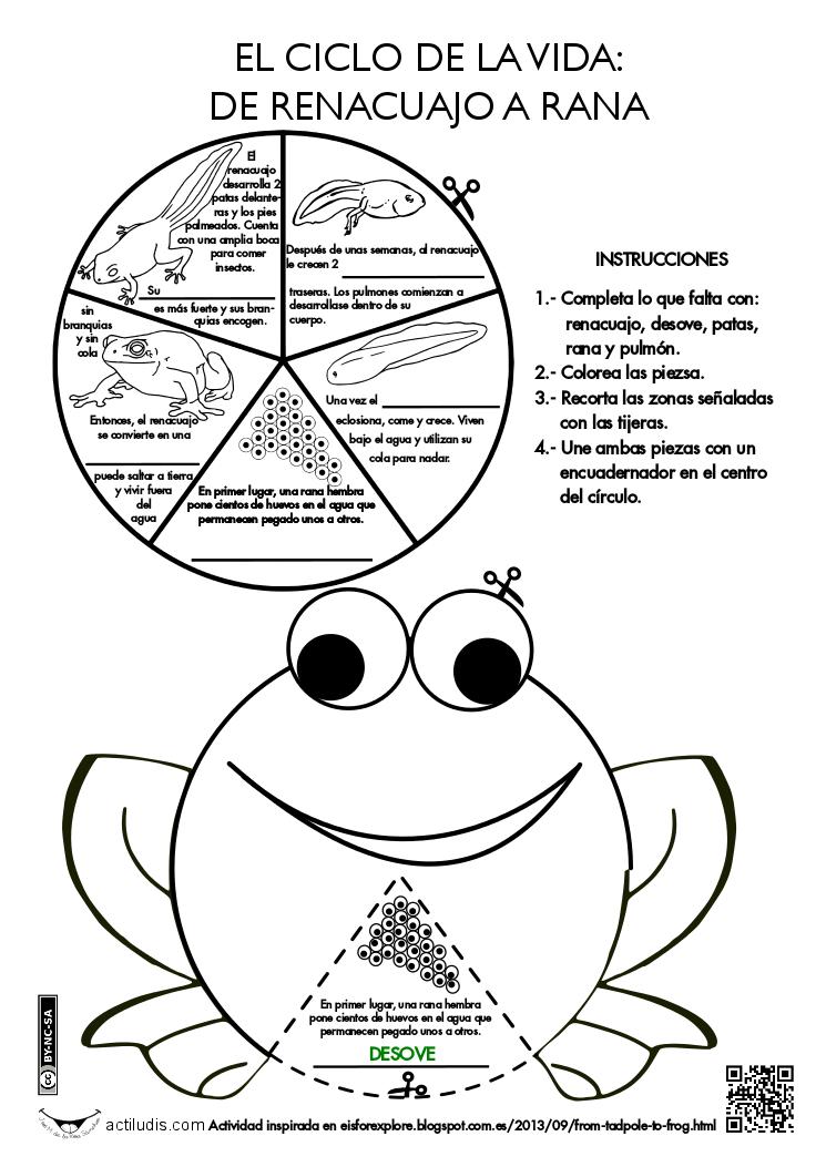 De renacuajo a rana | Ideas para la escuela | Pinterest | Ciencia ...