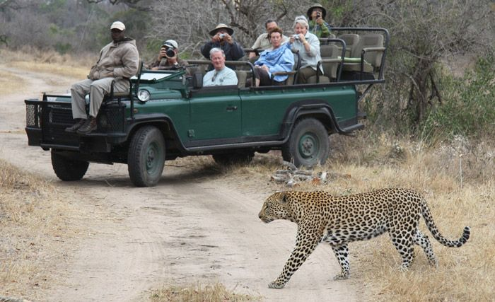 Spotting one of the Big Five from an open safari vehicle