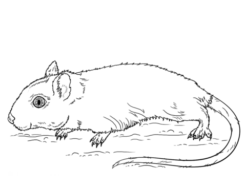 gerbil coloring page lovely pinterest coloring pagesgerbil coloring page