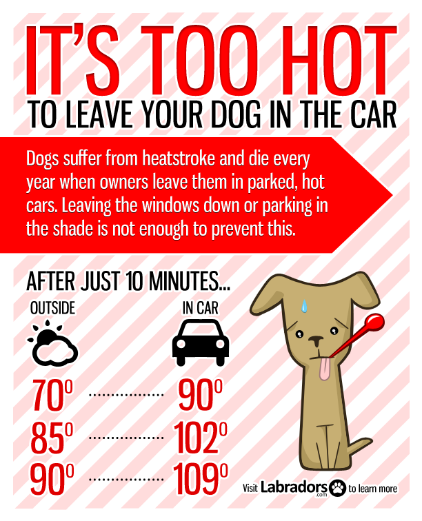 Too Hot For Your Dog Please Think Twice Before Leaving Your Pet In The Car Hot Cars Dog Health Canine Health