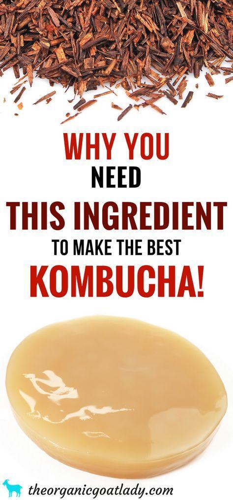 The Best Tasting Kombucha Tea Blend Kombucha Flavors