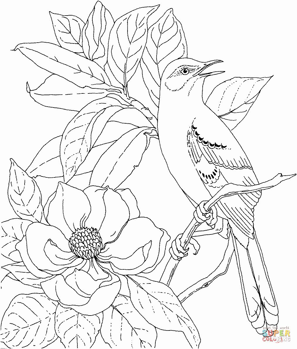 Texas State Bird Coloring Page Unique Louisiana State Bird And Flower Coloring Page Flowers Hea Bird Coloring Pages Owl Coloring Pages Geometric Coloring Pages