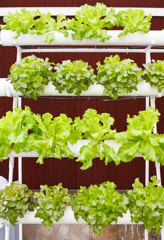 Build Your Own Aeroponics System dreamstime_s_23851317 ...