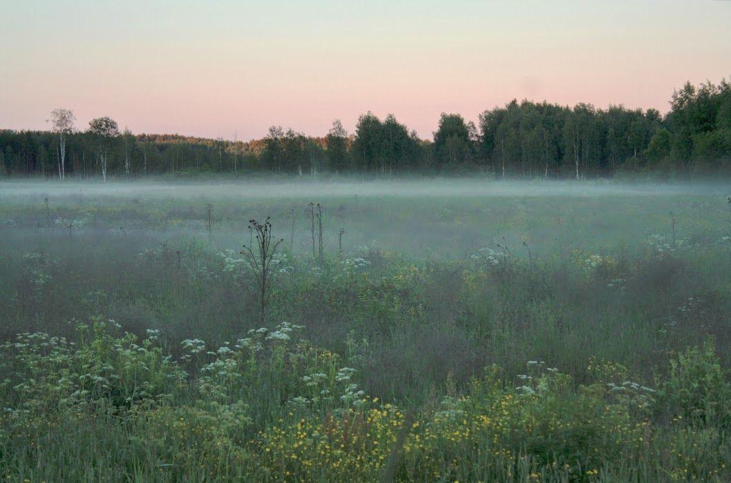Herkkupurkki: valokuva, mist, landscape, summer, Finland