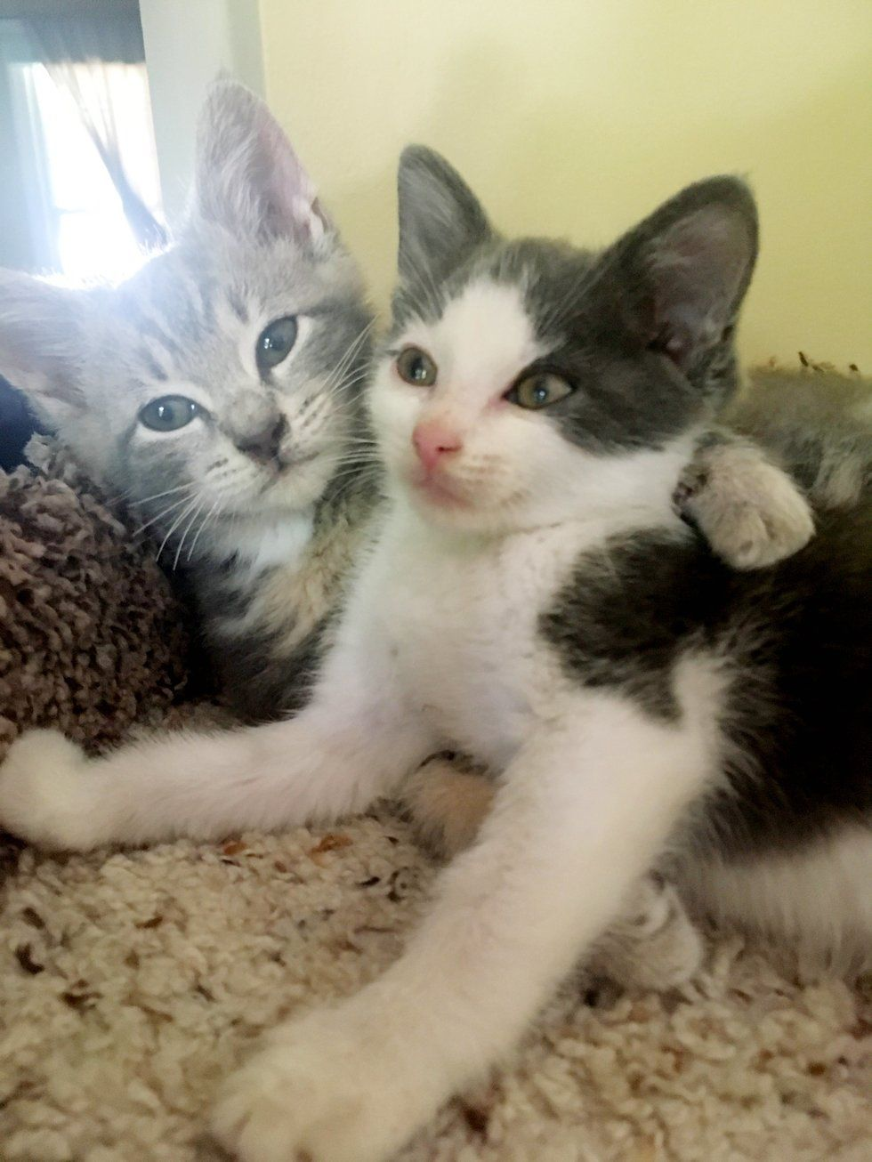 Kitten Who Lost His Siblings Finds New Brother To Cuddle They Won T Leave Each Other S Side Love Meow Kittensnames Kitten Kitty Games Cuddling