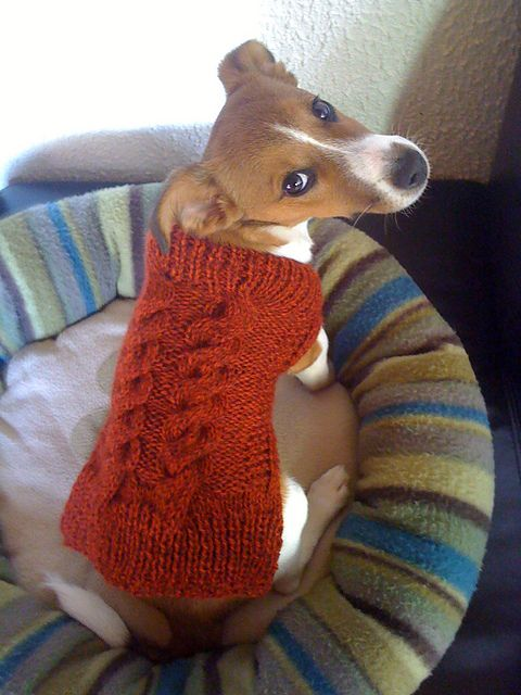 Easy Dog Sweaters pattern by Talking Tails | Knitting ...
