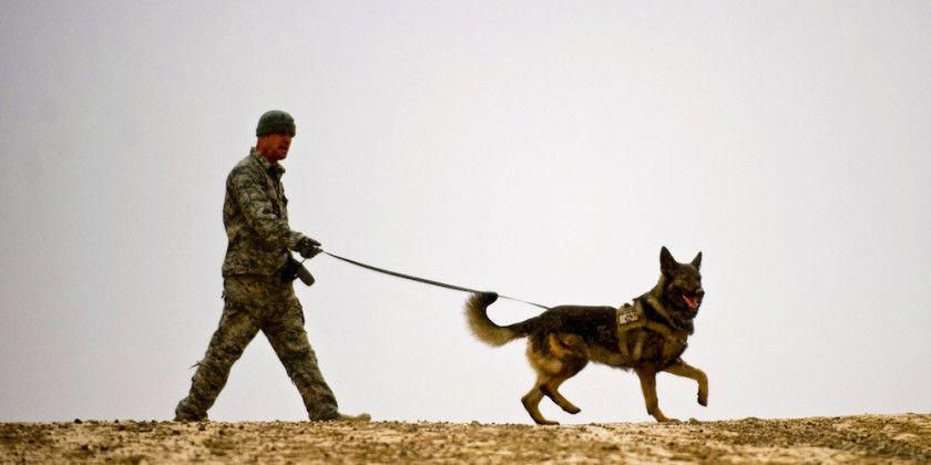 How To Deal With Aggressive Dog Behavior Problems   Dog behavior, Dog training, Dog training obedience