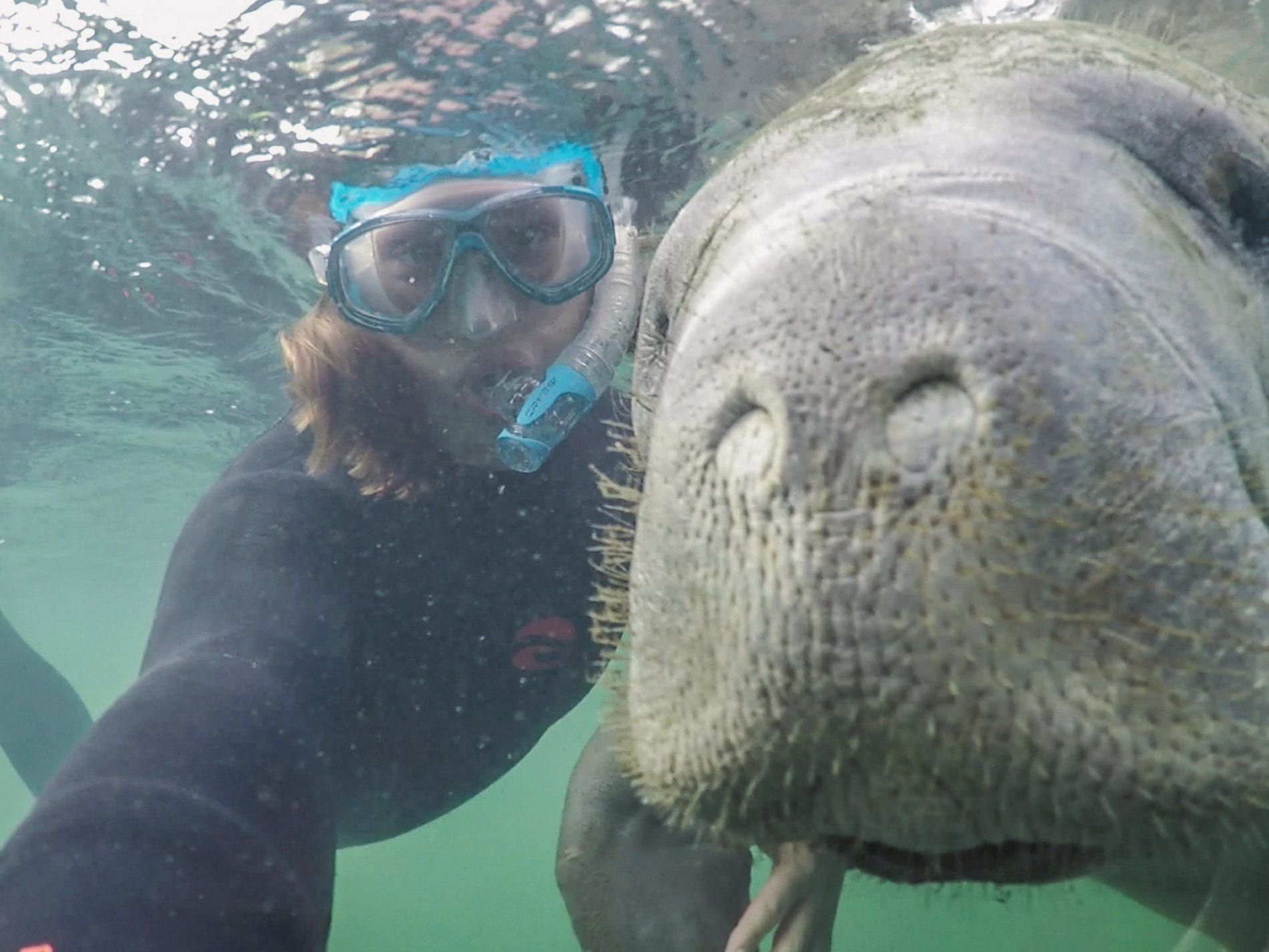 My Guide to Booking the Best Manatee Tours in Crystal