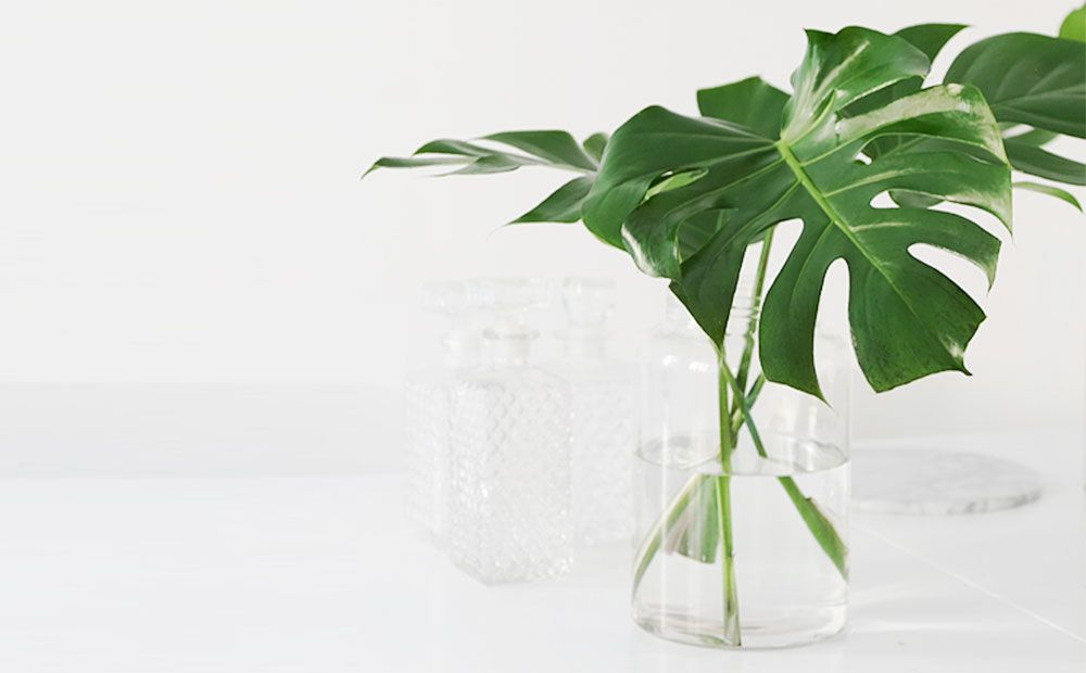Related image | Plants, Monstera, Monstera deliciosa